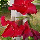 Porch post lilies by ♥⊱ B. Randi Bailey