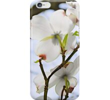 Canopy of Dogwoods iPhone Case/Skin