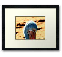 Lone Pelican Framed Print