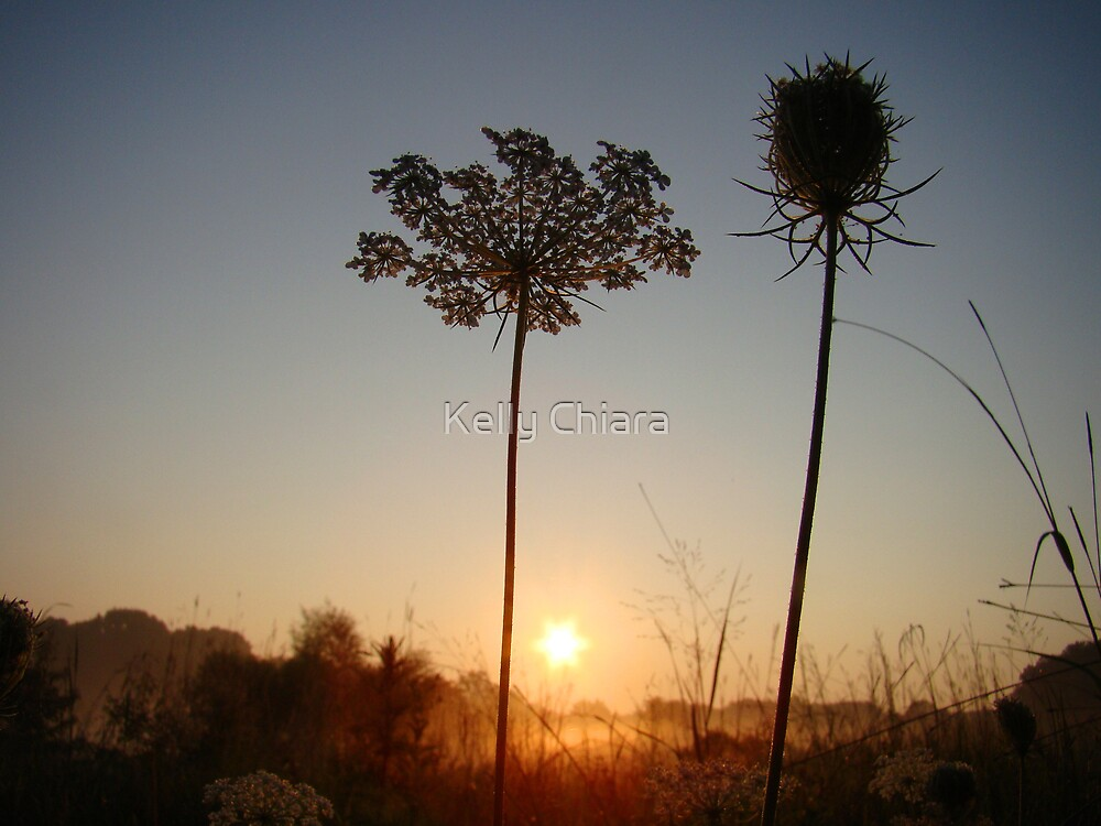 Weed Silhouette by Kelly Chiara