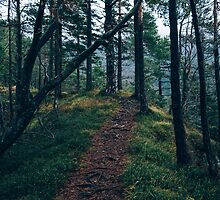 A walk through the forest by Randomthings