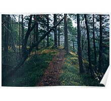 A walk through the forest Poster