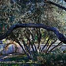 Garden at Tumacacori Mission by Linda Gregory