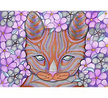 Flower Cat Photographic Print