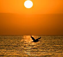 Ocean Silhouette by PGornell