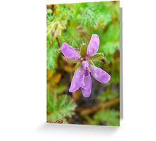 Little Purple Flower Greeting Card