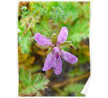 Little Purple Flower Poster