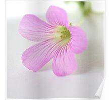 Pink & Pretty Poster