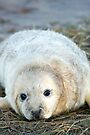 Donna Nook Seal by Paul Thompson Photography