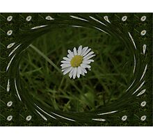 Surrounded by daises Photographic Print