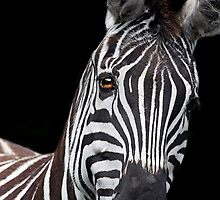 Burchells Zebra 2 by LisaRoberts