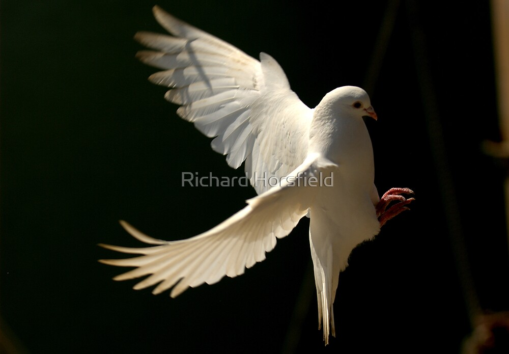 Dove Landing by Richard Horsfield