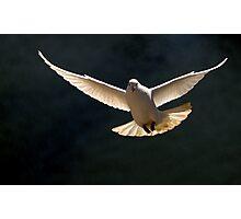Dove Flight Photographic Print