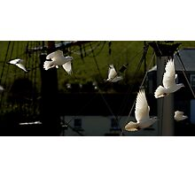 Flock of Doves Photographic Print
