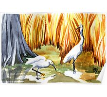 Egrets In The Ditch Poster