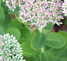 Busy Bee by digitaldavers