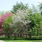 Colors Of Trees by Linda Miller Gesualdo