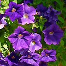 Purple Passion by gailrush