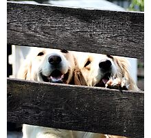 "Goofy Lovely Duo- 09"" Photographic Print"