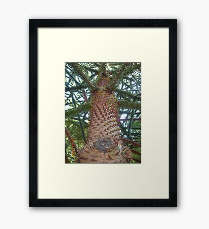 From another angle Framed Print