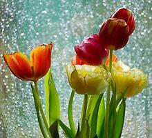 Tulips and Rain by vanStaffs