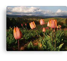 Tulips at Gembrook - Dandenong Ranges Canvas Print