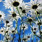 wild flowers series # V...! by sendao