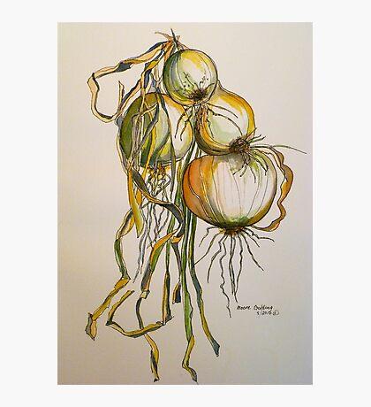 Drying onions Tuscany p&w 2010.  Photographic Print