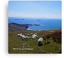 Ireland - Ring of Kerry Sheep Canvas Print