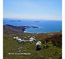 Ireland - Ring of Kerry Sheep Photographic Print