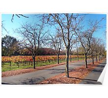 Sterling Wineries- Calistoga Poster
