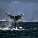 Tail Slapping  by Alfredo Herrera