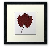 Russet red Framed Print