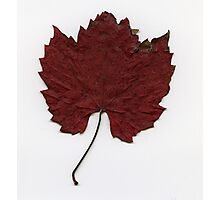 Russet red Photographic Print