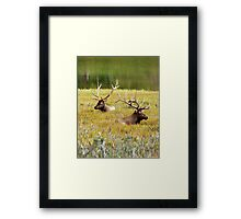 Sitting Bulls Framed Print