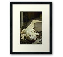 Gator White Framed Print
