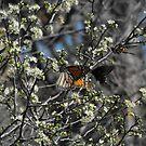 Three Butterflies by Susan Russell