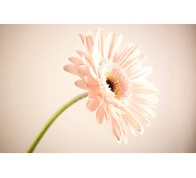 A Soft Touch Photographic Print