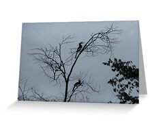 Hornbill Silhouette Greeting Card
