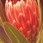 Protea by Dennis Wetherley