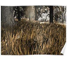 sunny meadow in the woods Poster