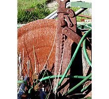 Wallaby Jack Photographic Print