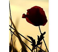 Softest Solitude Photographic Print