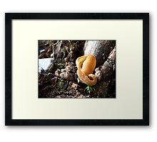 Sombrero Mushroom Framed Print