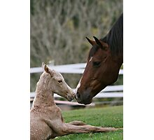 sky and foal Photographic Print