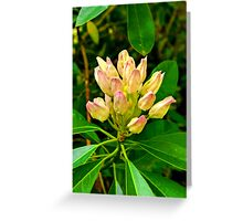 Rhododendron #1 Greeting Card