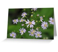 Fringed Purple Aster- Aster Ciliolatus  Greeting Card
