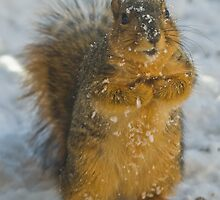 Please, sir, may I have another peanut? by PGornell