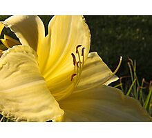 Cool It Daylily Photographic Print
