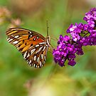 Gulf Fritillary for Jesika and Jim by Bonnie T.  Barry